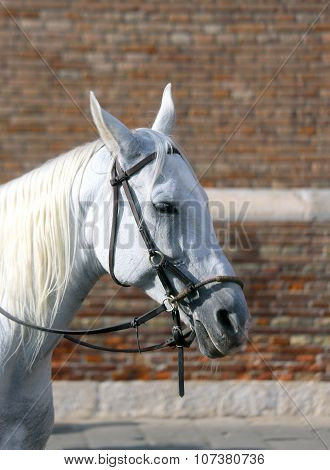 Horse With Long Horsehair