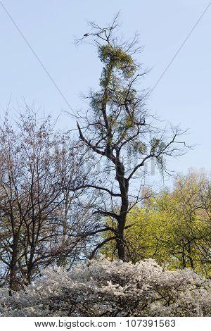 Dead Tree And Turtledove On It