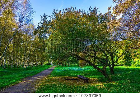 Autumn Park With Branchy Trees And Road