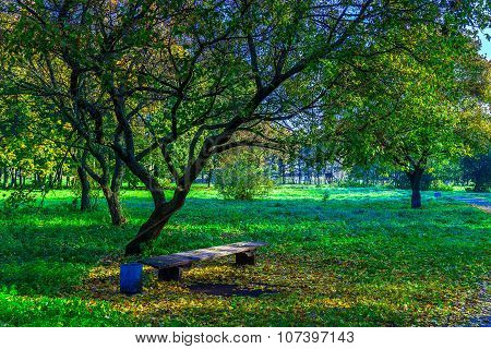 Trees With Bench On Green Grass In Park