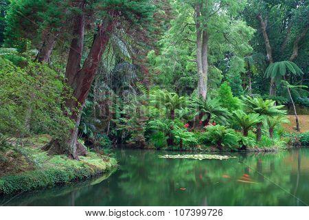 The Terra Nostra Garden On Sao Miguel Island, Azores.
