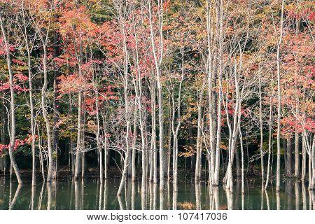 Autumn Scene In Ny