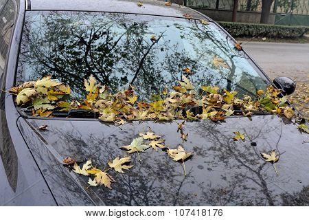 Autumn Leaves On Auto