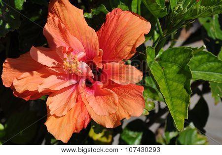 Nature's Stars: In Peach