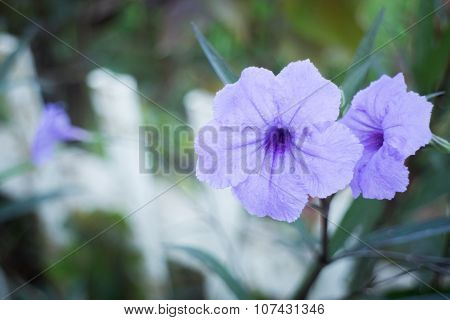 Violet Flower Bloom In The Garden