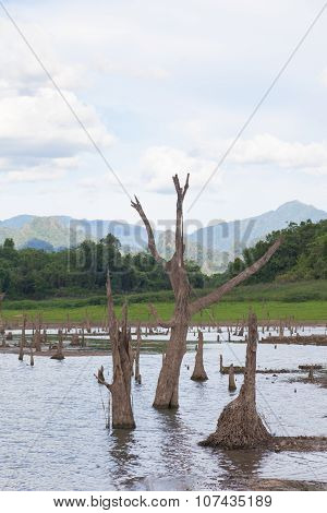 Remains Of Dead Trees