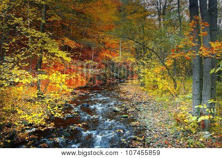 River in autumnal forest