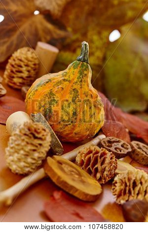 Selection of autumn decoration accessories with pineal, small marrow, leaves.