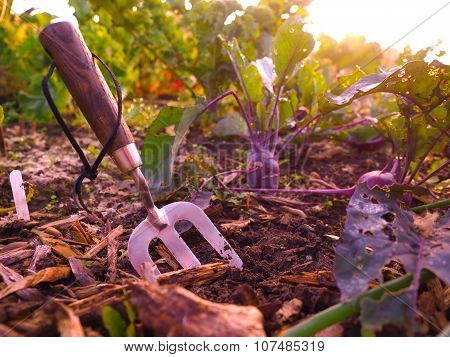 Small Garden Fork in the soil in a vegetable patch