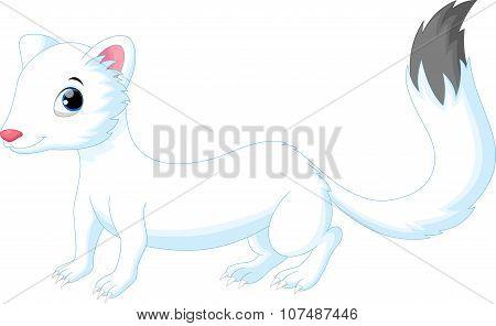 Cute white Least Weasel