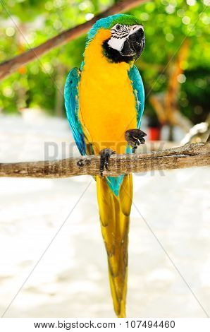 Beautiful Parrot Macaw On Tropical Island