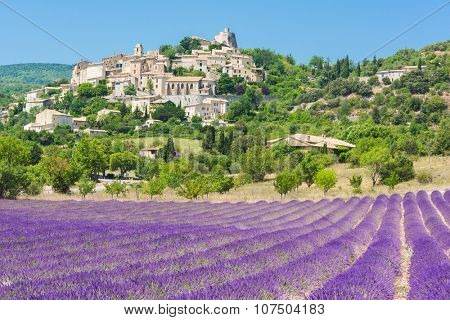 Small but beautiful old town of Simiane la Rotonde with a lavender field in front of it, Provence - France