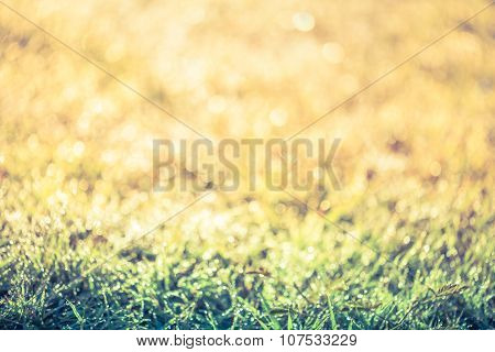 Abstract Grass With Drops On Natural Blurred Background. Outdoors