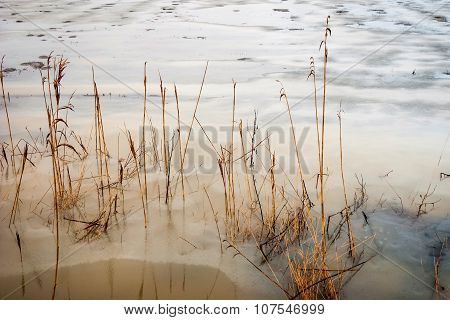 Floded Field In Winter