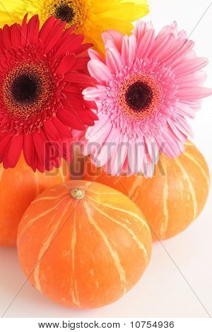 Three pumpkins and three colorful daisies