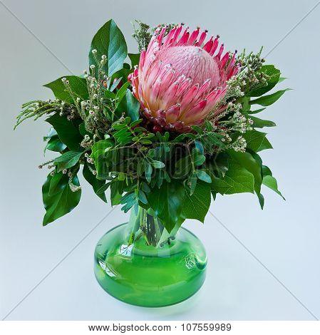 Protea Blossom