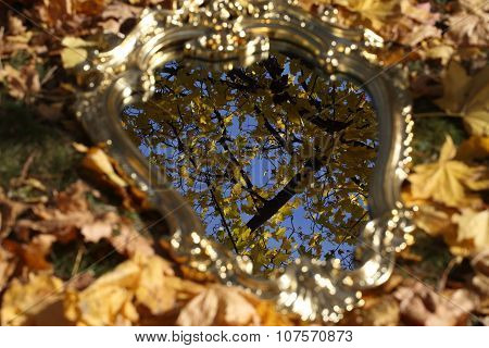 Reflexion In A Mirror Of Autumn Leaves On Maple Branches