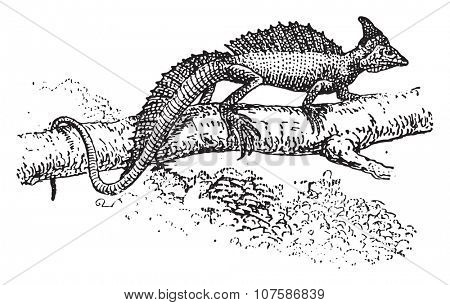 Basilisk, vintage engraved illustration. Dictionary of words and things - Larive and Fleury - 1895.