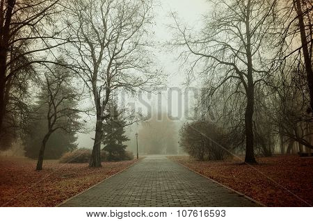 Autumn landscape in dense fog - foggy alley with bare trees and wet road poster