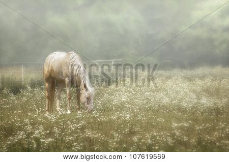 Horse In A Pasture Of Wildflowers