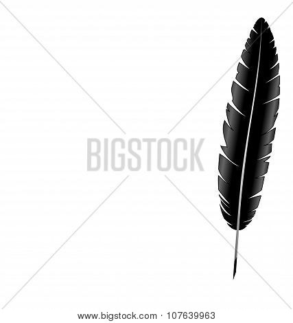 Feather Isolated On White