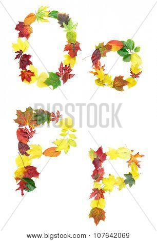 Font made of autumn leaves isolated on white. Letters o and p.