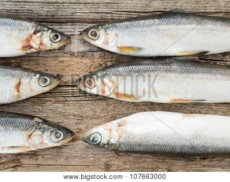 Vendace Fishes On The Gray Wooden Board