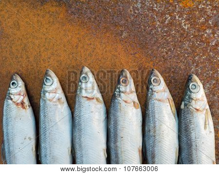 Vendace Fishes On The Rusty Iron Sheet