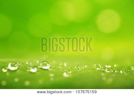 Abstract Background, Green Leaf Texture And  Rain Drops