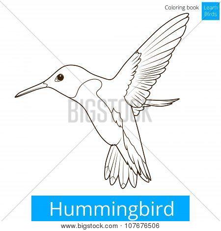Hummingbird learn birds coloring book vector