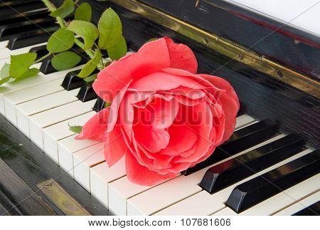 Condolence Card - Roses On Piano