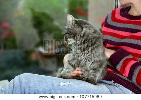 Grey lazy cat sitting on woman's knees near window