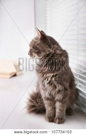 Beautiful grey cat sitting on window board with book, close up poster