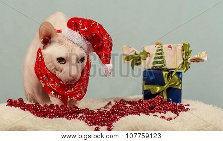 purebred cat dressed as Santa Claus