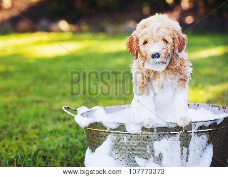 Adorable Cute Young Puppy Outside in the Yard Taking a Bath Covered in Soapy Bubbles