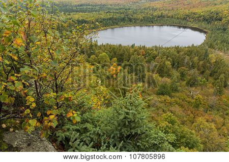 Forest & Lake Scenic