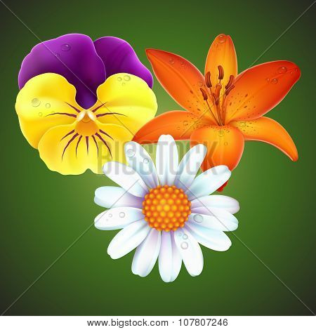Realistic viola tricolor, lily and daisy vector set