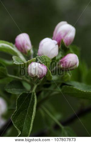 Flower Bubs