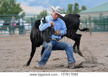 Cowboy Steer Wrestling