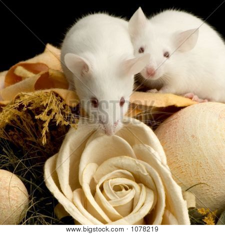 white mouse in front of a white background poster