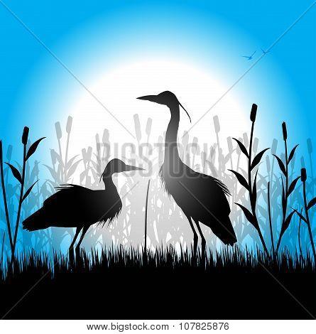 silhouette of herons in the marsh
