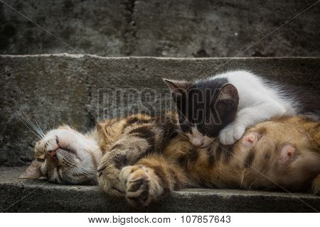 Sleeping cat mother feeds her kitten at stairs