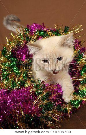 Really cute meow christmas kitten