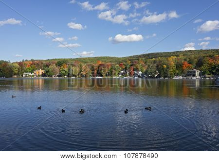 Lake in Autumn with Ducks