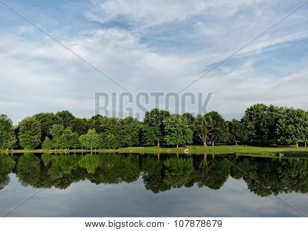 Summer Trees Reflection