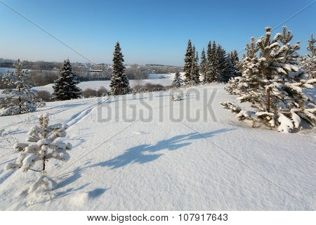Fir trees on a ski slope with ski and country