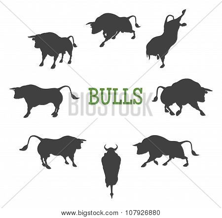 Idle and Moving Bulls