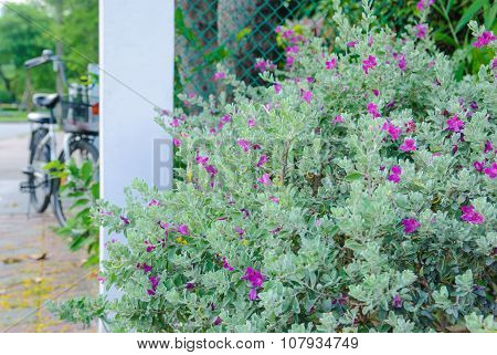 Flowering shrub on the background of the bike in Lumpini Park, Bangkok.