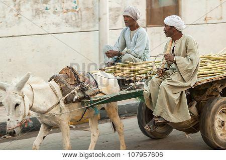 Egyptian men ride his donkey chariot