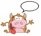 Happy Calf Cartoon Character With Speech Bubble poster